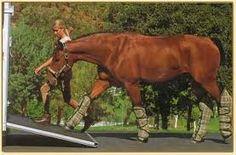 Si vous possédez pas vos propre camion et remorque des chevaux, vous besoin de engagé quelqu'un qui peut transporter pour vous. C'est un plus bonne idée au lieu de just emprenté parce que c'est personne sont des experts et peut transporter votre cheval dans un facon très sécuritaire.