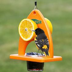Oriole Delight Feeder:  Attract orioles with this bright-orange buffet feeder that gives these beautiful birds lots of room to feed on their favorite foods--oranges and grape jelly!