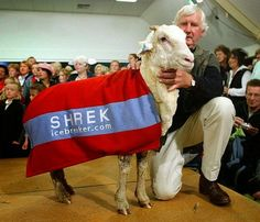 shrek-the-sheep-2[6]