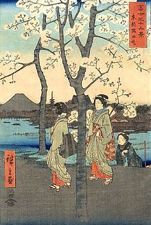 """""""Hanami"""" is the centuries-old practice of picnicking under a blooming sakura or ume tree. The custom is said to have started during the Nara Period (710–794) when it was ume blossoms that people admired in the beginning. But by the Heian Period (794–1185), cherry blossoms came to attract more attention and hanami was synonymous with sakura."""