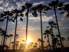 Bom dia Mallorca 💛🇪🇸❤️ #mallorca #sacoma #urlaub #ferias #viagemjovem #spain #ferias Spain, Celestial, Sunset, Outdoor, Road Maps, Buen Dia, Destinations, Outdoors, Sevilla Spain