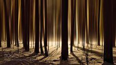 Forest by alyabev. @go4fotos
