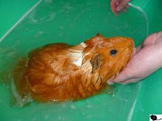 il nage