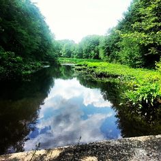The view from the bridge over by Beaver Pond in Franklin, Massachusetts. #FranklinMA #FranklinMass #Pond #Massachusetts