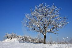 Photo about Scenic view of lone cherry tree in winter covered with snow, blue sky background. Image of landscape, countryside, stark - 12693923 Landscaping Images, Lone Tree, Blue Sky Background, Winter Trees, Cherry Tree, Lonely, Countryside, Snow, Stock Photos