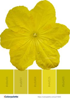 Color Palette Ideas from Yellow Flower Petal Image