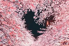 【撮影者に取材】これぞ奇跡の1枚…ハート型の夜桜が美しすぎる Heart In Nature, Nature Nature, Mother Nature, Sakura Cherry Blossom, Cherry Blossoms, Japanese Landscape, Japanese Flowers, Kawaii Shop, Love Wallpaper