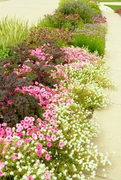 Use ground covers to soften concrete, pavers, decking, etc.