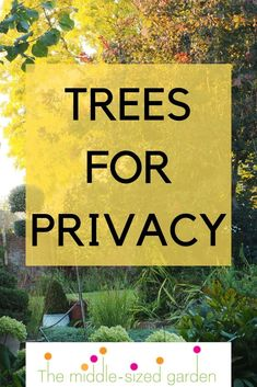 The 8 best perfect-for-privacy garden trees - The Middle-Sized Garden The best trees for small and m Garden Trees, Balcony Garden, Lawn And Garden, Garden Paths, Flower Landscape, Landscape Design, Garden Design, Privacy Trees, Garden Privacy