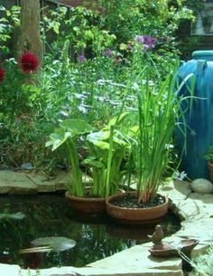 A cottage garden and pond in my back yard!