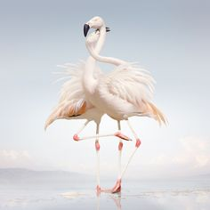 Album cover art: Rustie – Green Language