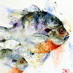 Bluegill sunfish watercolor print by dean crouser. Watercolor Fish, Watercolor Animals, Watercolor Paintings, Watercolor Paper, Watercolours, Fish Paintings, Tattoo Watercolor, Original Paintings, Kunst Poster