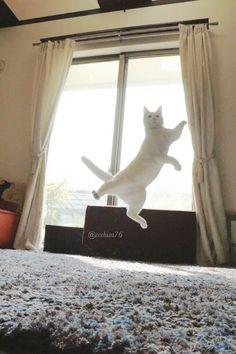"""[ の猫が世界中のインターネットユーザーの心を釘付に ] ------------------** You mean  """"tooth and nail"""" Japanese cat wins the heart of the Internet? Or - Japanese cat wins heart of Internet by tooth and claw?"""