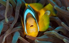 Underwater Sea Life Photography by Dmitry Marchenko
