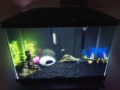 This article talks about the Marineland aquarium. Find out if it's a good crayfish aquarium tank. 20 Gallon Aquarium, 10 Gallon Fish Tank, Mini Aquarium, Aquarium Setup, Live Aquarium Plants, Tropical Aquarium, Aquarium Fish Tank, Planted Aquarium, Tropical Fish