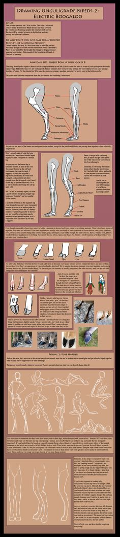 How To Draw Unguligrade Bipeds: Advanced Course by The13thBlackCat.deviantart.com on @deviantART