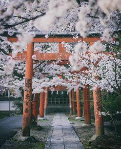 New sakura tree japan spring Ideas Tree Photography, Amazing Photography, Landscape Photography, Beginner Photography, Walmart Photography, Photography Reflector, Photography Composition, Photography Courses, Photography Backdrops