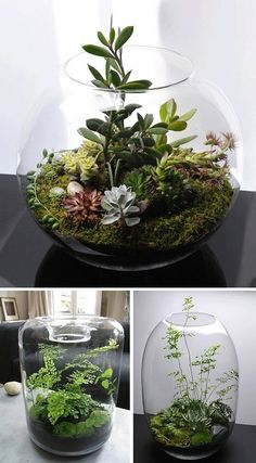 Labola loves these mini gardens inside of glasses, jars,vases and cloches. they…