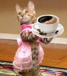 Cafe and cat Good Morning Sunday Images, Good Morning Sunshine, I Love Coffee, My Coffee, Coffee Art, Coffee Break, Morning Coffee, Best Coffee Roasters, Animals And Pets