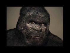 The Most Compelling Bigfoot Footage Real Bigfoot, Bigfoot News, Bigfoot Sasquatch, Bigfoot Footage, Bigfoot Pictures, Bigfoot Sightings, Loch Ness Monster, Mothman, Cryptozoology