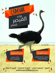 مزارع القيصر للنعام العنوان: جمعية عرابى - البوابة السابعة - طريق 5 شمال ت/ 01027000880 01002200925
