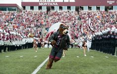 Monte racing out of the tunnel in Washington-Grizzly Stadium,