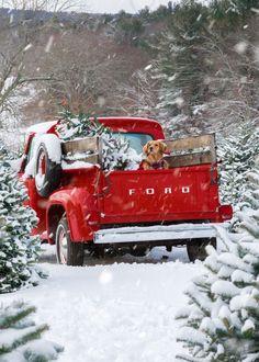 Christmas Collage, Christmas Tree Farm, Merry Little Christmas, Cozy Christmas, Christmas Time, Family Christmas, Winter Christmas Scenes, Primitive Christmas, Scandinavian Christmas