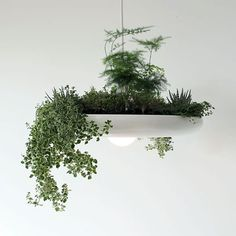 Babylon is a plantable light fixture - individually hand-formed from aluminum by skilled Canadian craftsmen.Whether used as an organic center piece or a working herb garden over the kitchen counter, B