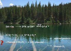 Photoproductionof One-Electron Reducing Intermediatesby Chromophoric Dissolved Organic Matter (CDOM): Relation to O2– and H2O2…