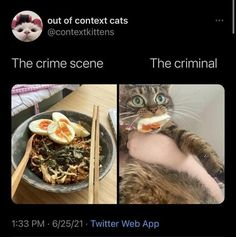 35 Random And Hilarious Pictures From Today's Internets Tweet Quotes, Funny Quotes, Food Humor, Best Funny Pictures, Adulting, Memes, Random, Cats, Animals