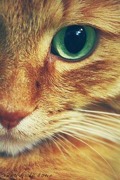 Pero que lindo rubio de ojos verdes <3