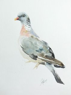 ARTFINDER: Wood Pigeon (Columba palumbus) by Andrzej Rabiega - Wood Pigeon - watercolor