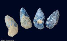 Ensemble de quatre bifaces trouvés dans le niveau acheuléen, datant d'environ 300 000 ans, Étricourt-Manancourt (Somme), 2012.  Ces outils ont dû servir de couteaux de boucherie, hypothèse qui devra être confirmée par une étude tracéologique.