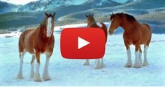 The horses start making snowballs with their hooves, and before long, a snowball fight is underway.