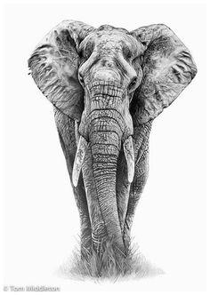 elefante 1 Funnel Cake funnel cake a la mode Photo Elephant, Elephant Love, Elephant Art, African Elephant, Animal Sketches, Animal Drawings, Pencil Drawings, Art Sketches, Art Drawings