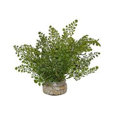 "15"" Fern in Rocks - Faux Arrangements (79 CAD) ❤ liked on Polyvore featuring home, home decor, floral decor, plants, filler, flowers, green, decorative accessories, flower stem and green home decor"