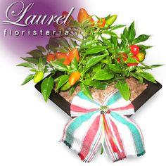 Qué manera tan exquisita y fina, al enviar esta planta comestible de chile sobre una base de cerámica, acentuada con nuestros colores patrios.