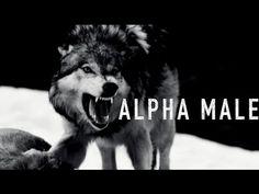 Alpha Male Motivational Video - TRULY MOTIVATIONAL
