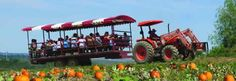 Springridge Farm: Celebrate this year's pumpkin crop at Harvest Festival! Boo barn, wagon rides, corn trail, puppet show, farm fun yard - $11. Pumpkin pies and pumpkins available in the barn market. Dates Offered: Weekends / Holidays