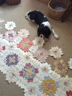 Lucy my dog checking my placement for my Lucy Boston quilt.EPP by Lisa Egan.