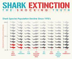 Shark Extinction.