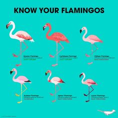 I love flamingos. My sister Know your flamingos Flamingo Party, Flamingo Decor, Flamingo Birthday, Flamingo Funny, Flamingo Bathroom, Flamingo Bird, Flamingo Pictures, Greater Flamingo, Festa Party
