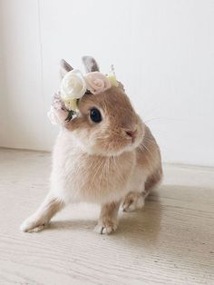 Adorable pet bunny wearing a flower headband. Transform any photo into a lasting memory  with our photo engraving pieces!