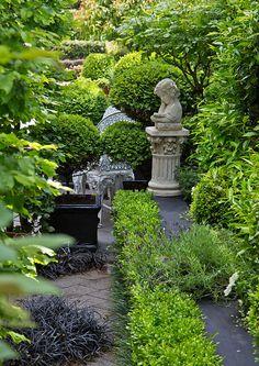 "Garden Design Nursery wild iris, dietes grandiflora and rosa ""sally holmes"" | hedge"