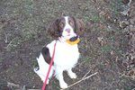 Training a dog with a shock collar, or electronic training device, is relatively easy, as long as some easy guidelines are followed. If the owner of the dog does not know how to train with an electronic collar, emotional damage can be done to the dog that may or may not be repairable. This type of collar should only be used if positive...