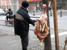 Dog meat trade - ..China.