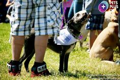 On Sunday, May 26 - Members of the Pets Plus Us pack participated in the 2013 Oakville & Milton Humane Society Mutt Strutt. The walk raised funds for the homeless, abused and neglected animals of Milton Ontario.