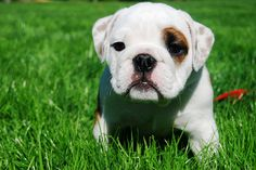 I just want a brindle-spotted bulldog named Moose. Is that too much to ask, world?