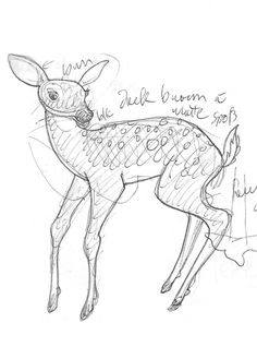 70. Fawn: pencil on paper