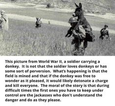 """ We are the donkey. Soldier Love, The Donkey, In A Nutshell, World War, Panda, Laughter, Funny Pictures, Funny Memes, Funny Shit"
